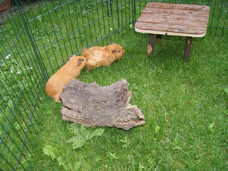 Empfehlen den tieren einen unterstand ein häuschen oder eine röhre